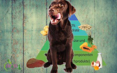 """25.08.2019 von 10.00 – 14.00 Uhr Vortrag """"Ernährung beim Hund"""" mit Andrea Frost, THP"""