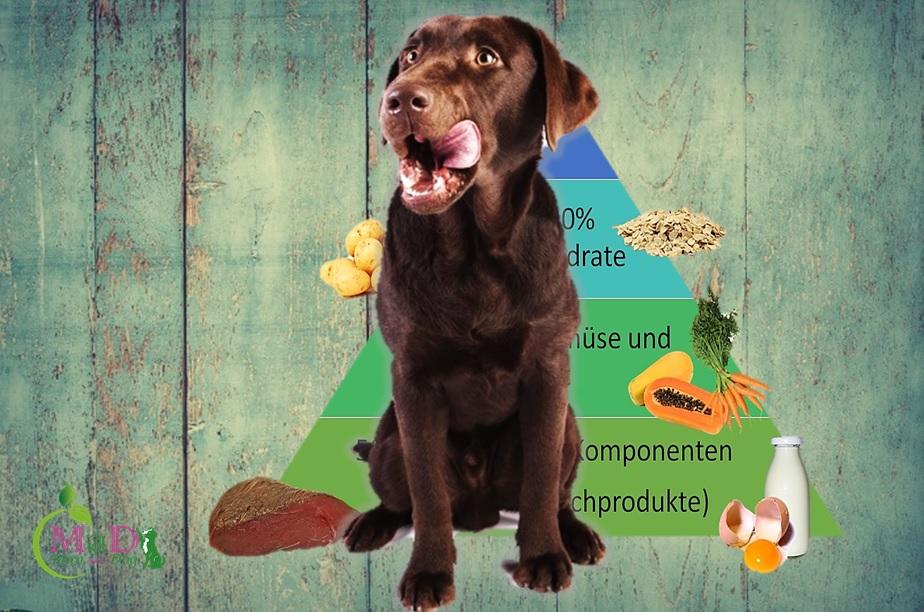 """Vortrag """"Ernährung beim Hund"""" mit Andrea Frost, THP"""