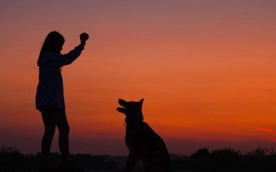 Kastrationspflicht per Vertrag bei Hunden